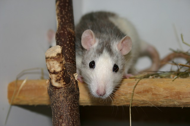 Wildlife Removal Services Pest Control Long Island